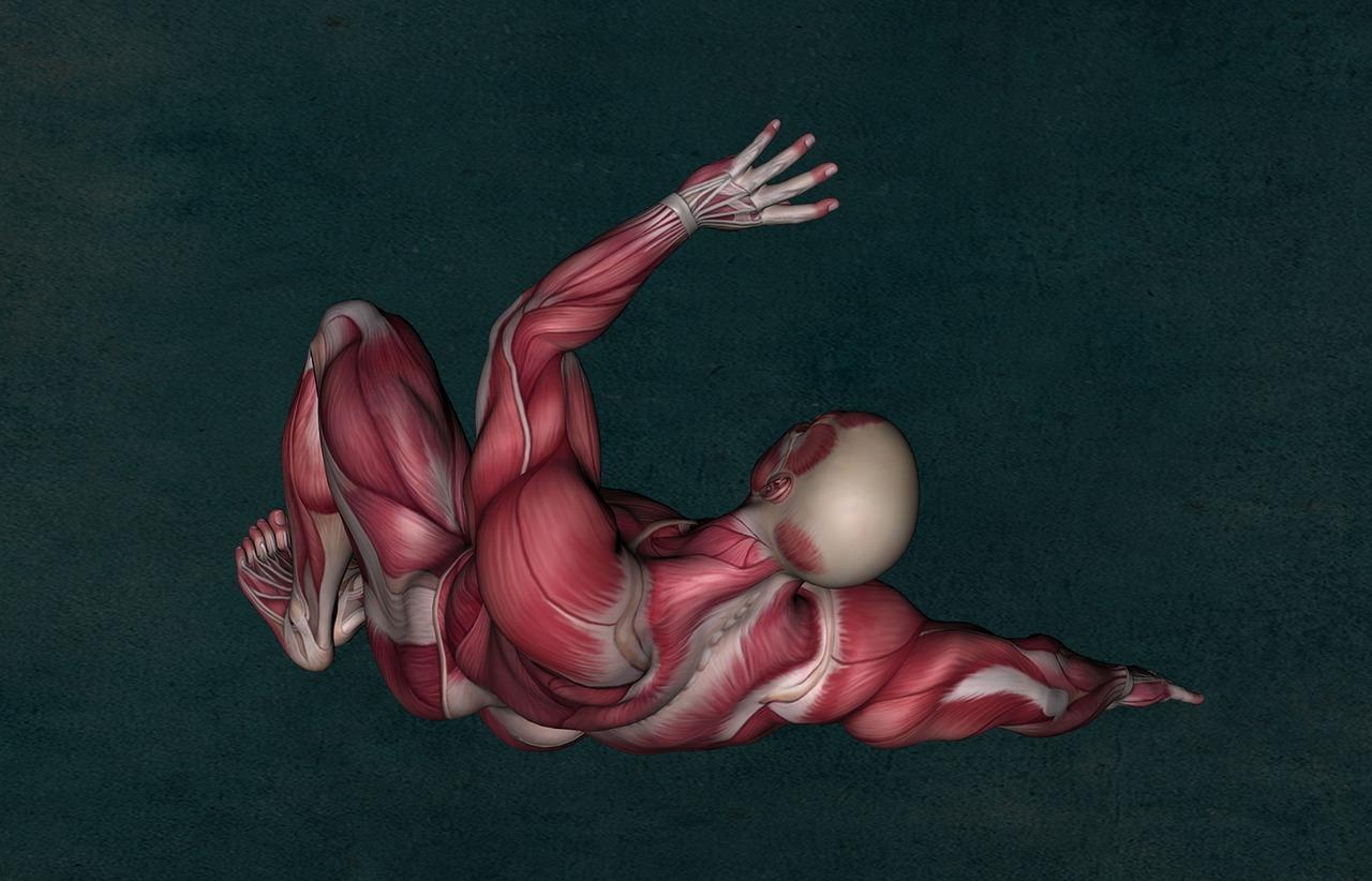 鍛えている筋肉の基礎を学べる動画を紹介・効率よく筋肥大する為の注意点は?
